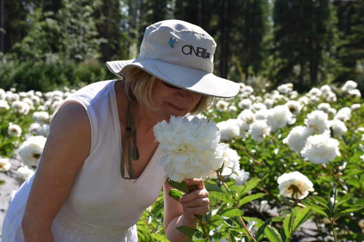 Alaskan Peonies, Scents make Sense when they make Cents