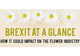 Brexit at a Glance. By: Caroline Marshall-Foster