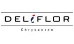 Flowersandcents interview with JD from Deliflor.