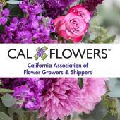 Flowersandcents interviews Steve Dionne of Cal Flowers.