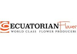 Interview with JP Tola of Ecuatorian flower a boutique rose grower.